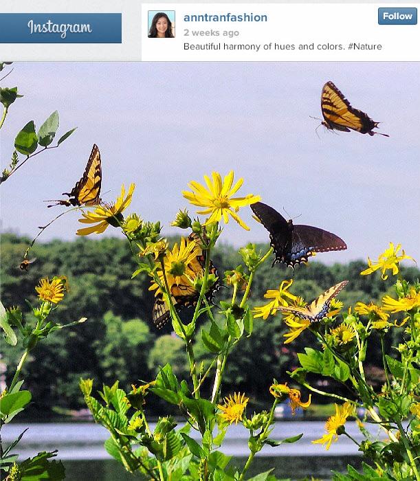 butterfliesInstagramAddictorStoryTeller.jpeg